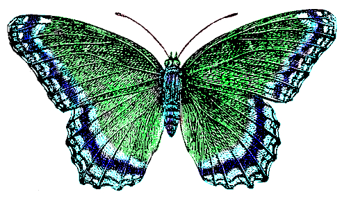blue-green-butterfly