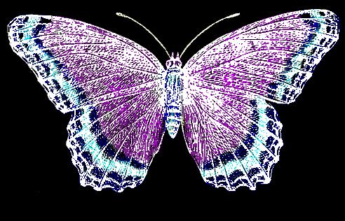 negative-butterfly