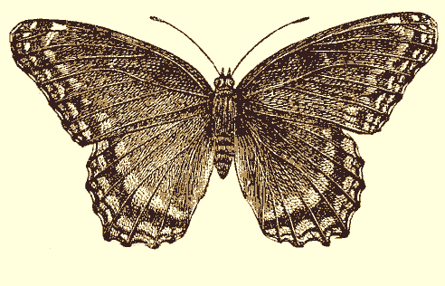 sepia-butterfly
