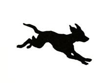 chase-dog