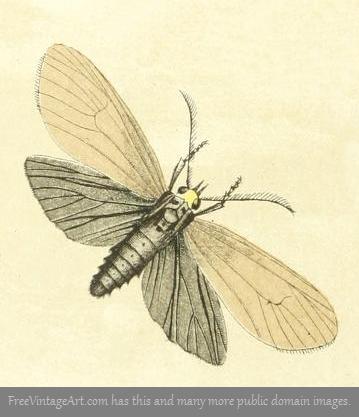 brown moth drawing
