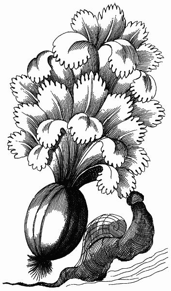 flower-design-5
