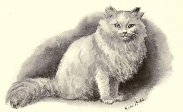 white persian cat drawing