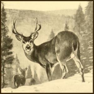 deer-rungius-s