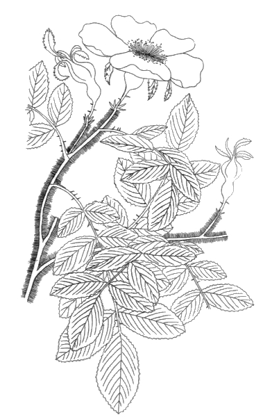 cassic art coloring pages - photo#33