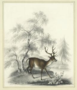 deer-alken