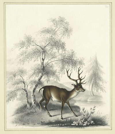deer drawing by henry thomas alken