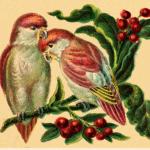 love-birds-2