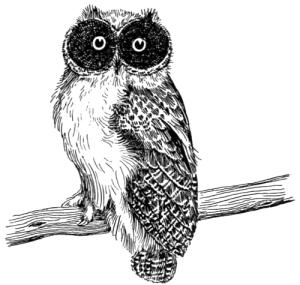 owl-1899