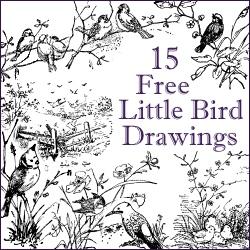 15 little bird drawings