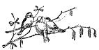 birds-on-branch