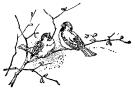 birds-on-branch2