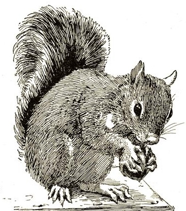 Squirrel Drawing Free Vintage Art
