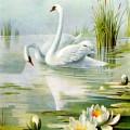 swan-pair