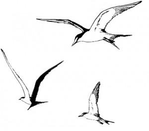 seagull-trio