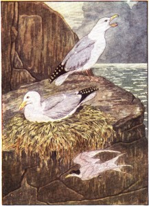 sea gull nest
