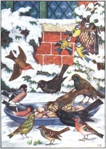 winter birds of England
