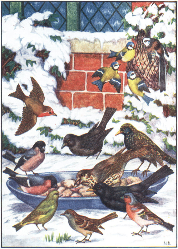 winter birds of England