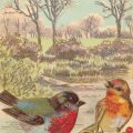 Vintage postcard illustration of two birds on a branch