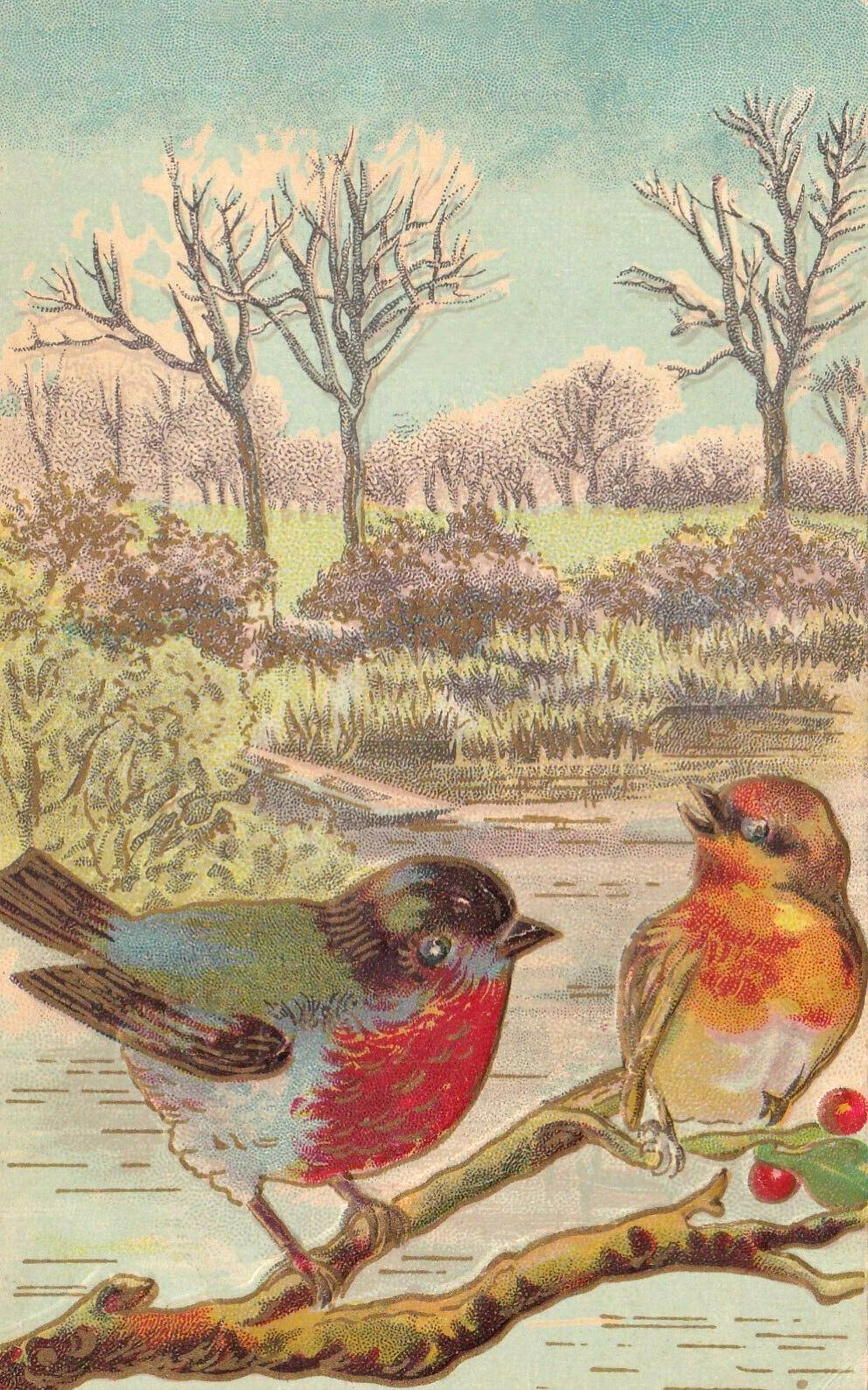 Vintage postcard illustration of two birds on a branch
