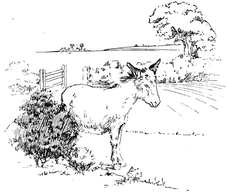 vintage pen and ink donkey drawing